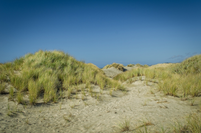 South Jetty 054