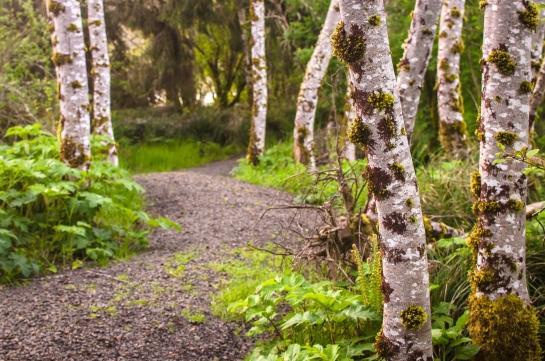 Siletz Trail -0055